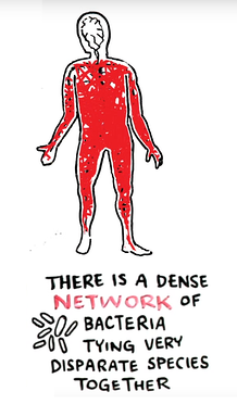 Understanding the Complex Network of Life 4.png